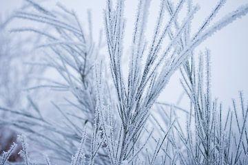 Witte wonderland, plantjes bedekt in een laagje sneeuw van Karijn | Fine art Natuur en Reis Fotografie