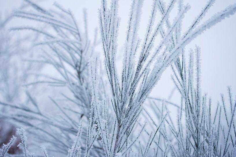 Witte wonderland, plantjes bedekt in een laagje sneeuw van Karijn   Fine art Natuur en Reis Fotografie
