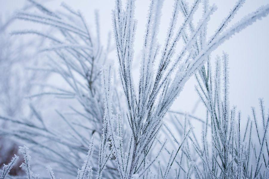 Witte wonderland, plantjes bedekt in een laagje sneeuw