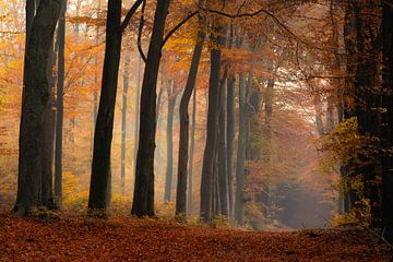 Bomen in de herfst van Jacco van Son