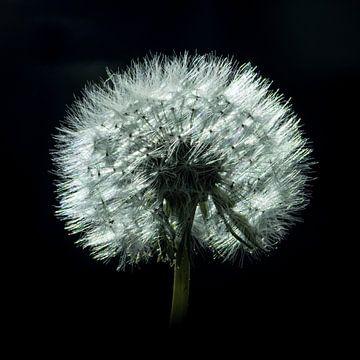 Doe een wens