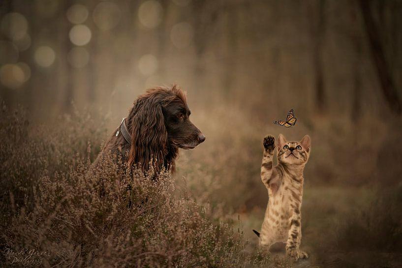 Kat en hond van Nanda Jansen
