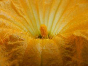 bloem van een pompoenplant