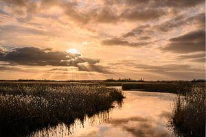 Fields of gold - Gouden zonsondergang van Ilona van Dijk
