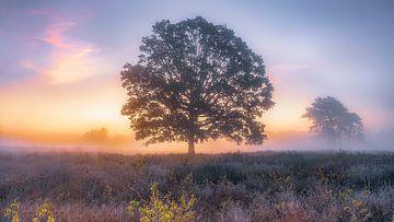 """"""" Baum des Lebens """" von Eric Hendriks"""