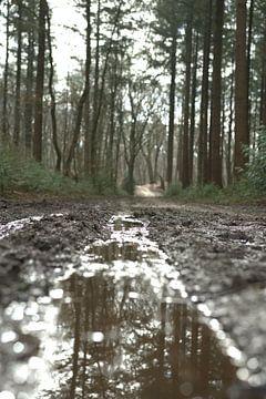 Wald von larissa lok