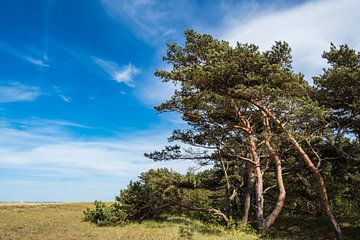 Küstenwald auf dem Fischland-Darß in Prerow von Rico Ködder
