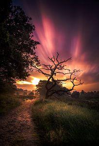 zonsopkomst nationaal park Sallandse heuvelrug van