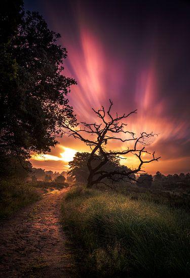 zonsopkomst nationaal park Sallandse heuvelrug van Martijn van Steenbergen