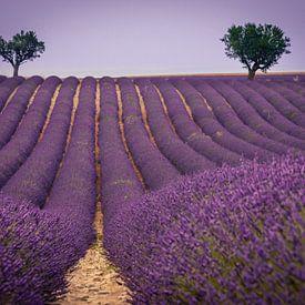 Lavendel landschap van Pieter van Dieren