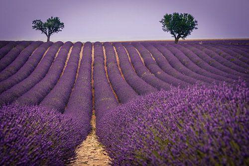 Lavendel landschap van