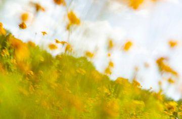 Een impressionistisch, Monet-achtig beeld van een veld (weiland) met gele, oranje en rode bloemen. E van John Quendag