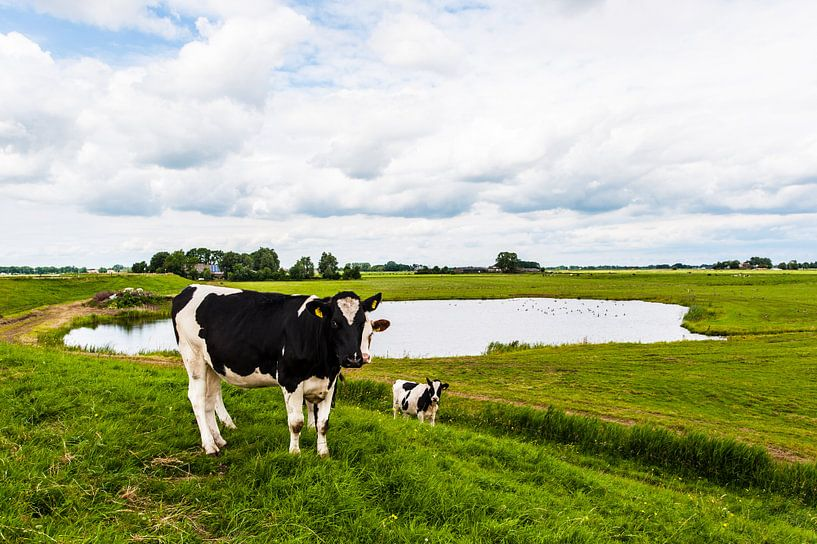 Dutch Cows van Brian Morgan