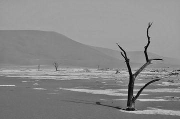Versteinerte Bäume in Dodevlei (Deaf Valley) von Renzo de Jonge