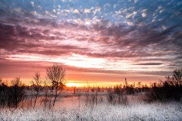 Bevroren velden van Jeroen Mikkers