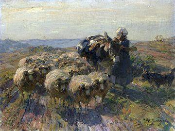 Kudde schapen met herderin en ezel in het veld,  HEINRICH VON ZÜGEL, ca 1925
