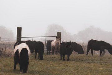 kleine Pferde von Tania Perneel
