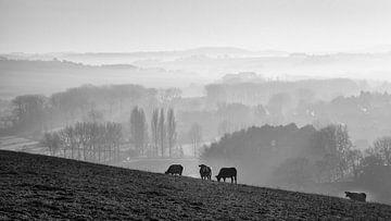 Hügelland im Nebel von Rob Boon