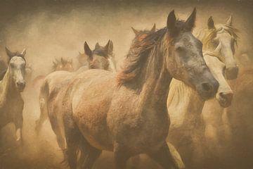 (CA007)  Paarden van didier de borle