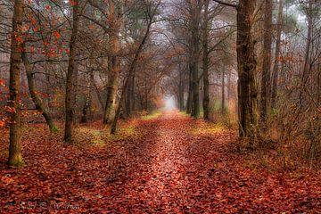 Herfstwandeling in de mist. van Karel Warburg