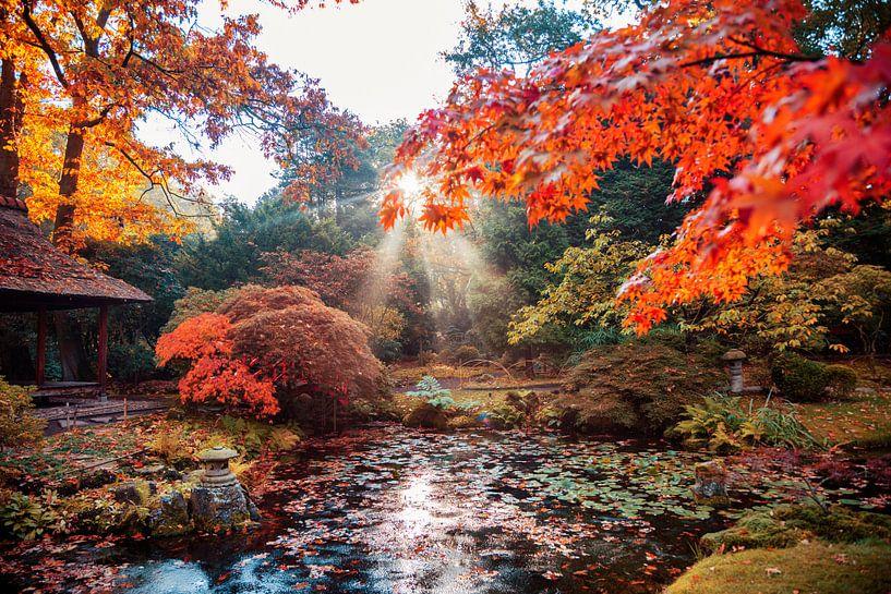 Herbsthintergrundpanorama im japanischen Park von Ariadna de Raadt-Goldberg