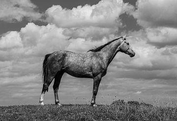 Paard in zwart/wit van By Foto Joukje
