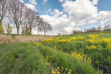 Blühender Raps in einem niederländischen Naturschutzgebiet von Ruud Morijn