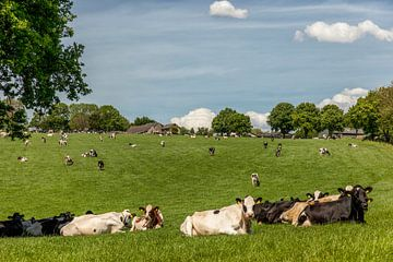 Grazende koeien Bosschenhuizen Zuid-Limburg von John Kreukniet
