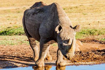 Afrikaanse zwarte neushoorn, Zuid-Afrika van Easycopters