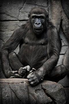 Anthropoider Gorilla-Affe sitzt und blickt mit vollem Gesicht, verblüfft durch den fragenden Blick,  von Michael Semenov