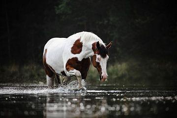 Geflecktes Pferd läuft durch das Wasser von Lotte van Alderen