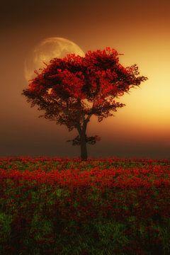 Landschap – Rode boom in de avond van Jan Keteleer