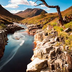 Eenzame boom bij rivier in Schotland van Johan Zwarthoed