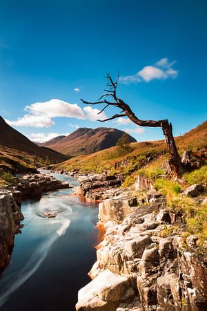 Einsamer Baum auf dem Fluss in Schottland
