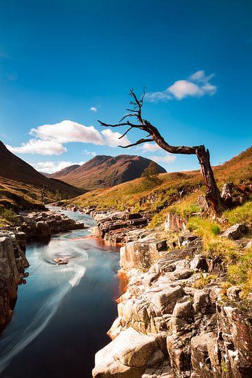 Eenzame boom bij rivier in Schotland