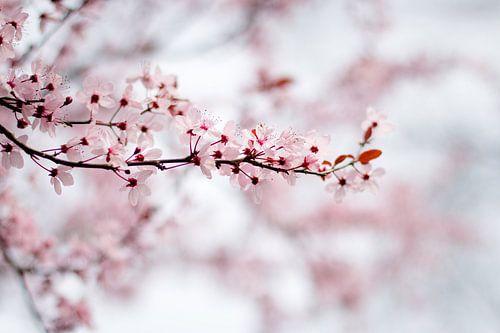 Roze Bloesem van Marly Tijhaar