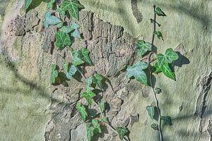 Bladerkunst op de boomstam van Ronald Smits