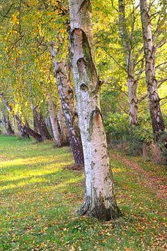herfstberk van Ostsee Bilder