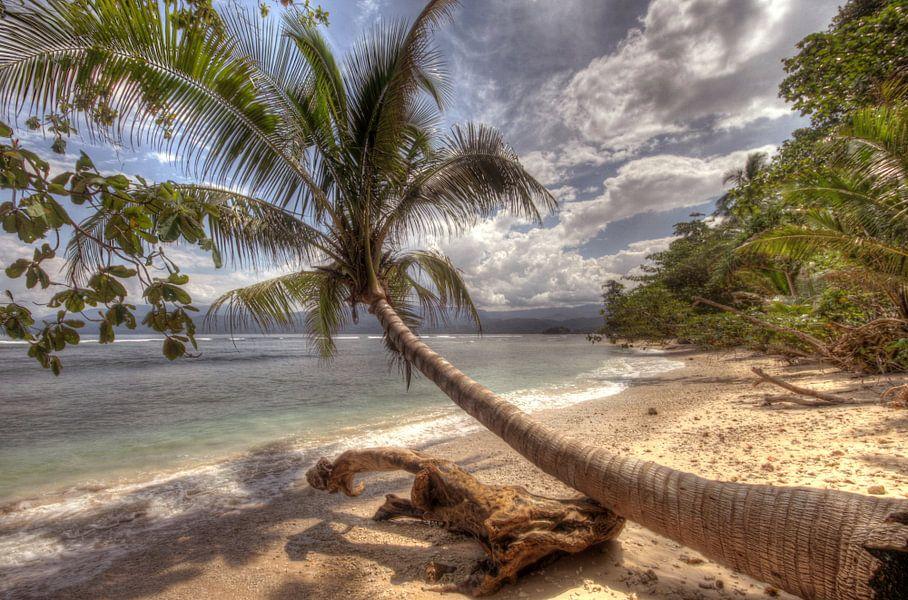 Paradise van Nina Olivari