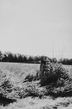 Schwarz-Weiß-Landschaft aus Twente von Holly Klein Oonk