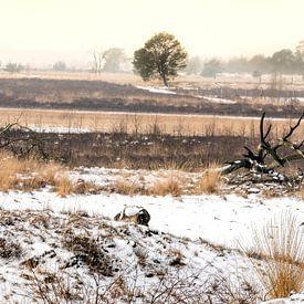 Landschap in winter van Gonnie van de Schans