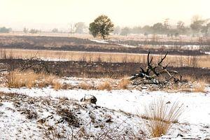 Landschap in winter van