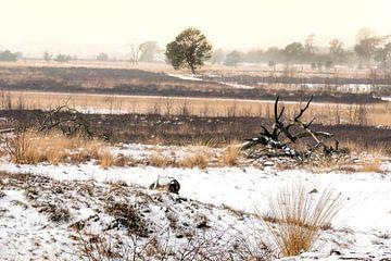 Paysage en hiver sur Gonnie van de Schans