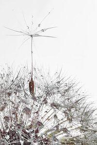 a soaring dandelion seed