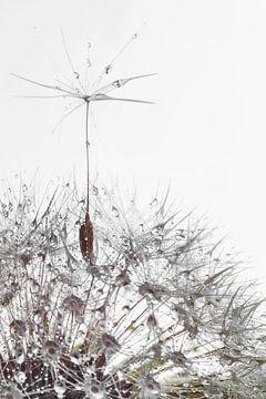 a soaring dandelion seed van