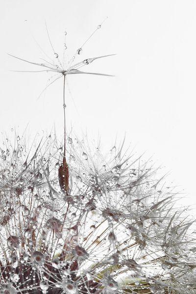 a soaring dandelion seed van Elianne van Turennout