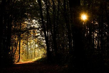 Zonsopkomst in het bos tijdens de herfst von J.A. van den Ende