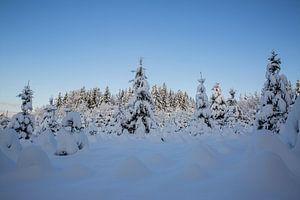 Winterwunderland im Garten und Wald mit Schnee von Martin Steiner