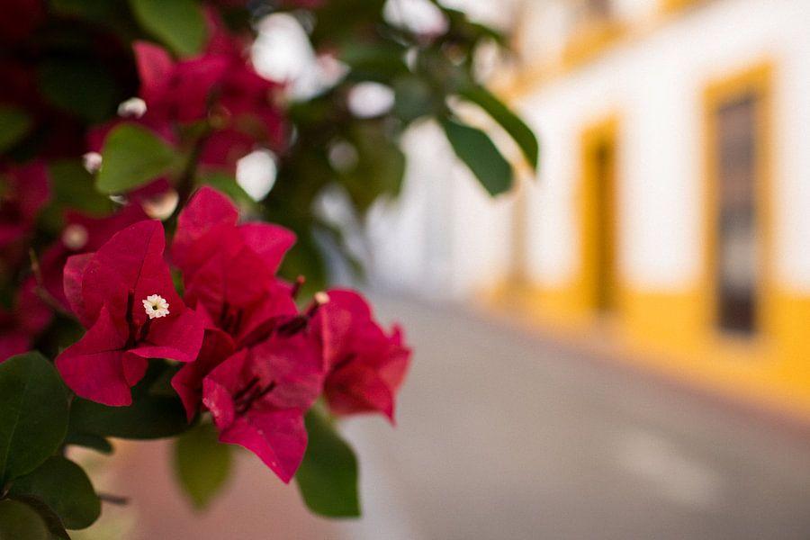 Bloemen in Mérida van Martijn Smeets