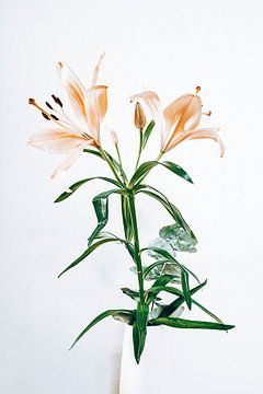 Lily van Michael Schulz-Dostal